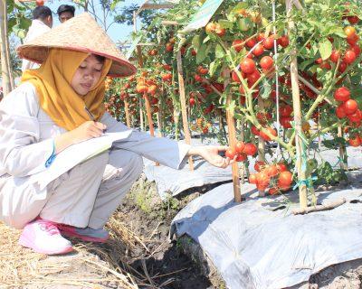 Keteknikan Pertanian