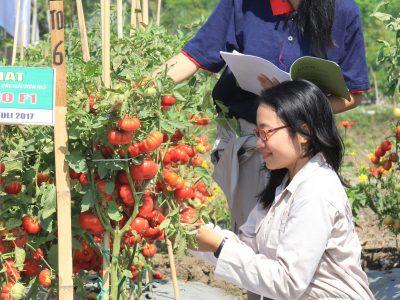 Produksi Tanaman Hortikultura